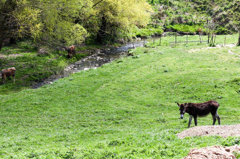 parco-fluviale-alcantara_sorgenti-floresta