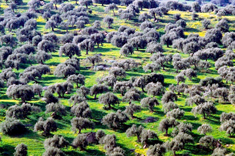 Riserva Naturale del Bosco della Favara