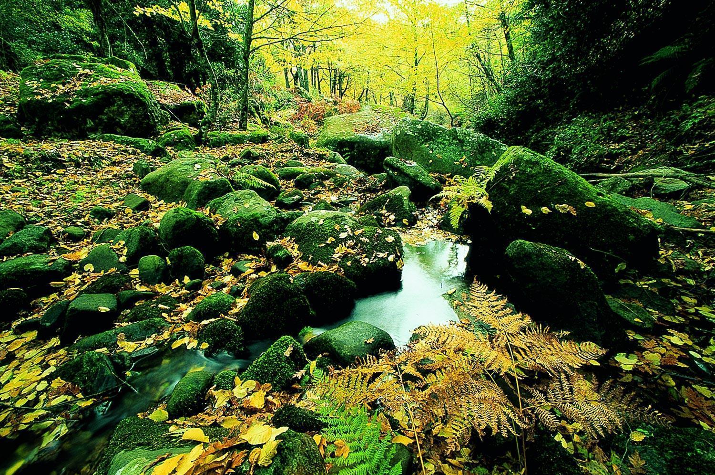Riserva Naturale Bosco di Malabotta