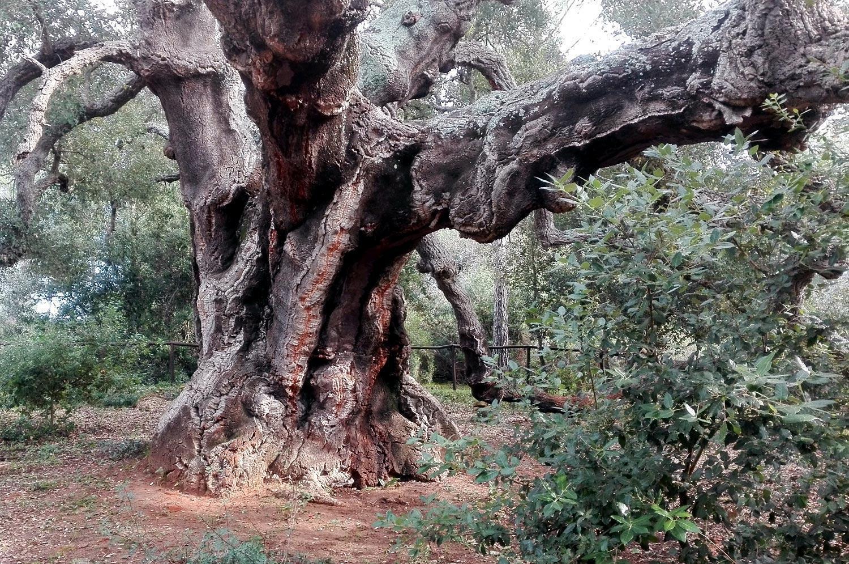 Riserva Naturale Bosco Santo Pietro